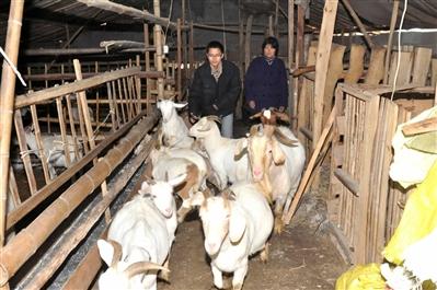 养羊场羊食槽设计图图片下载分享